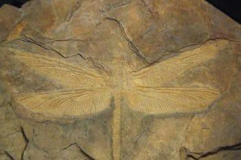 fosil johto