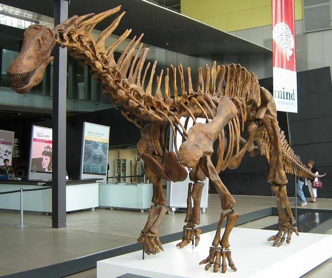 fosil amargasaurus kalos