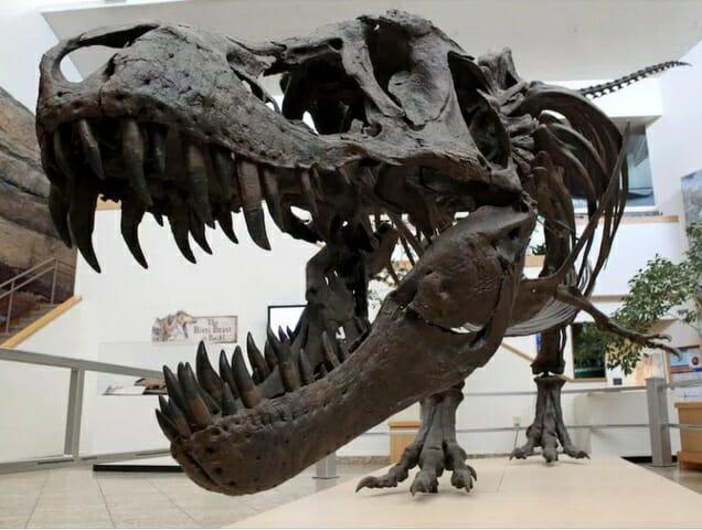 tiranosaurio kalos