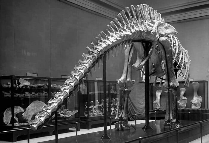 braquiosaurio hoenn
